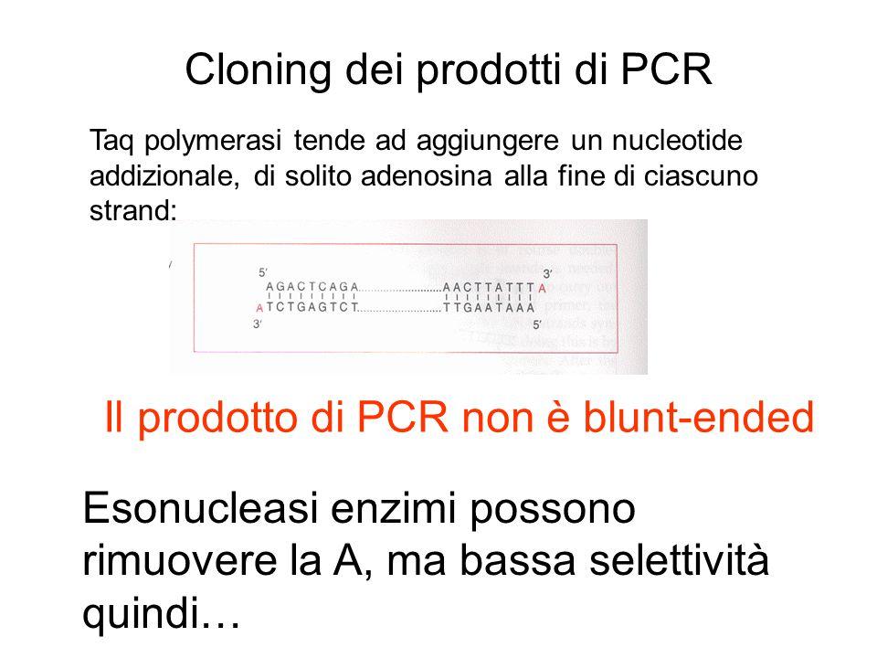 Cloning dei prodotti di PCR