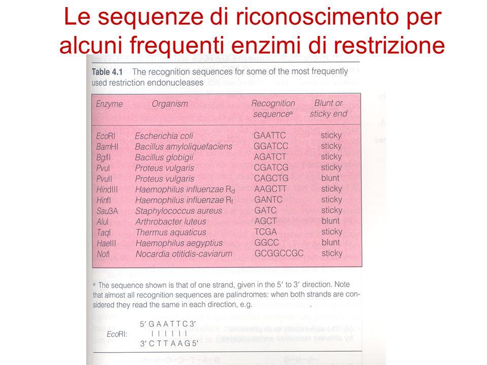Le sequenze di riconoscimento per alcuni frequenti enzimi di restrizione