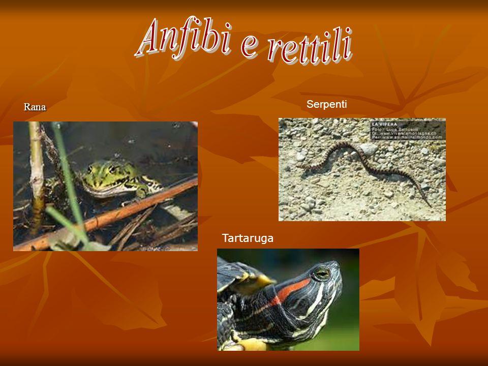 Anfibi e rettili Rana Serpenti Tartaruga