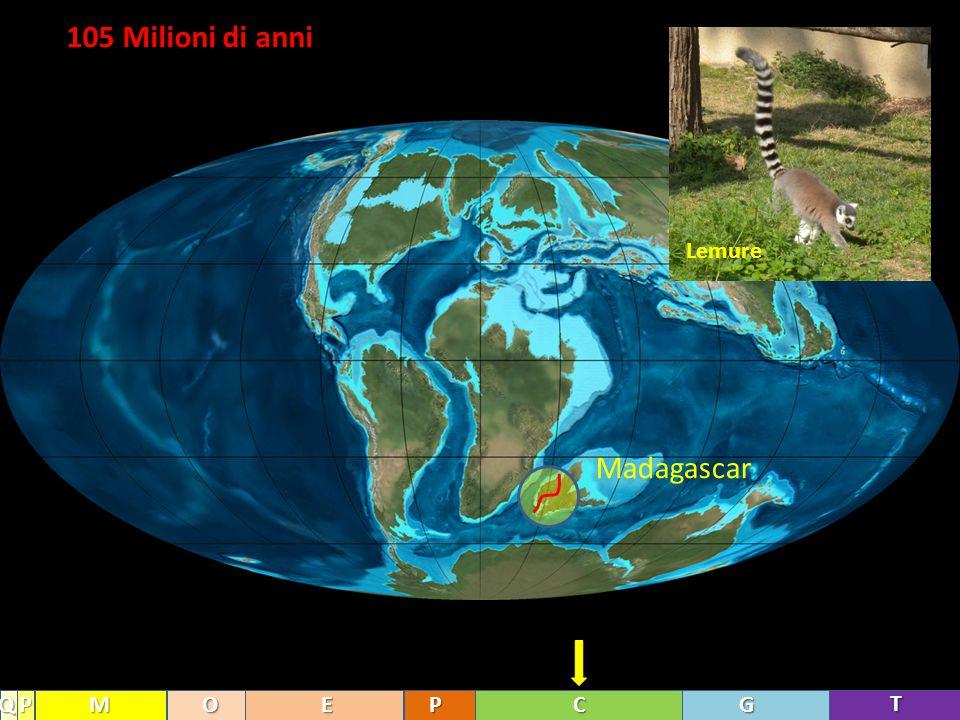 105 Milioni di anni Lemure Madagascar Q P M O E P C G T