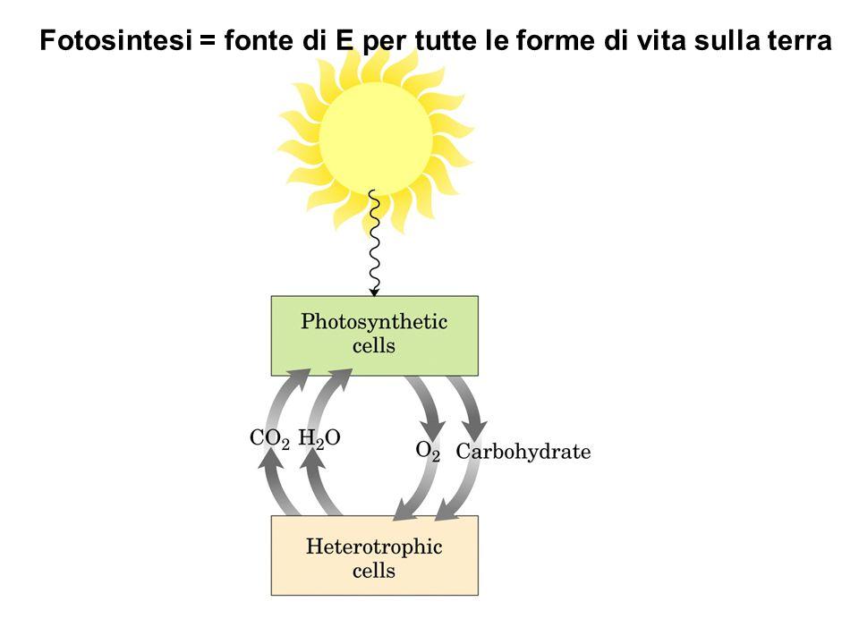 Fotosintesi = fonte di E per tutte le forme di vita sulla terra