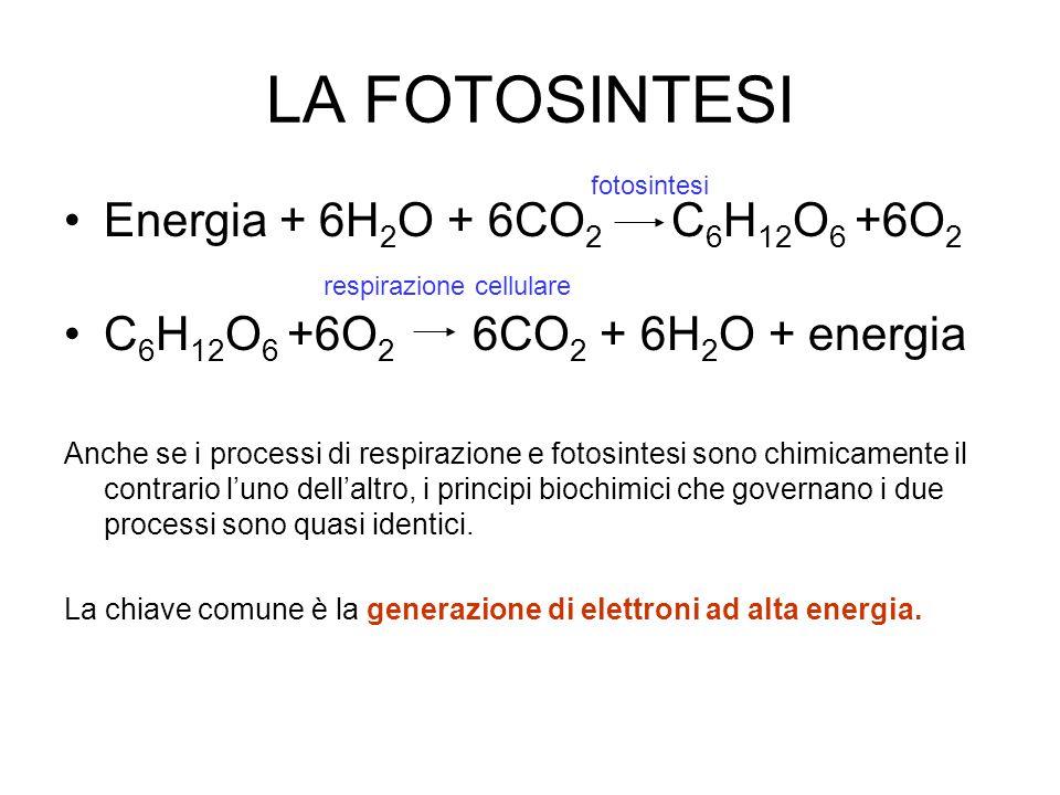 LA FOTOSINTESI Energia + 6H2O + 6CO2 C6H12O6 +6O2