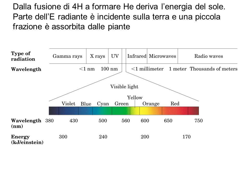 Dalla fusione di 4H a formare He deriva l'energia del sole