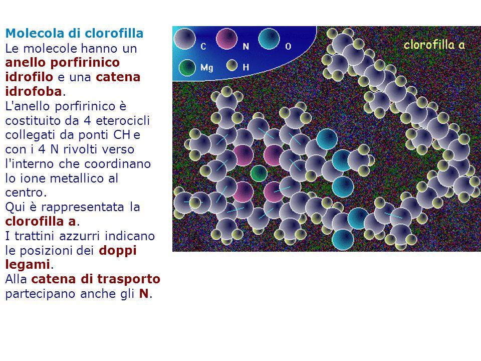 Molecola di clorofilla
