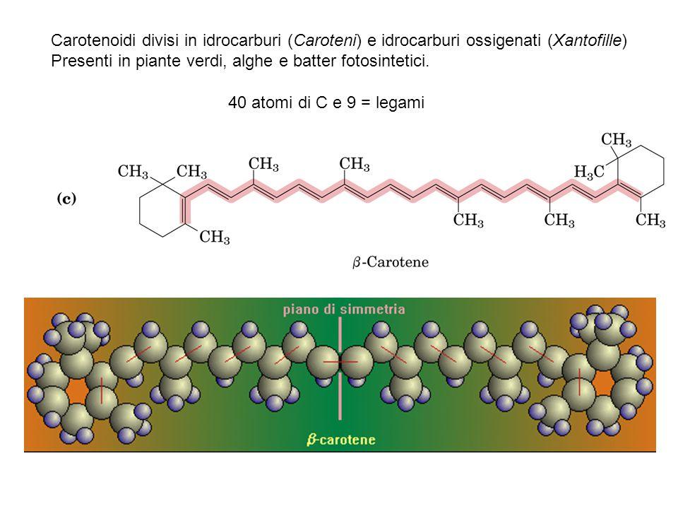 Carotenoidi divisi in idrocarburi (Caroteni) e idrocarburi ossigenati (Xantofille)