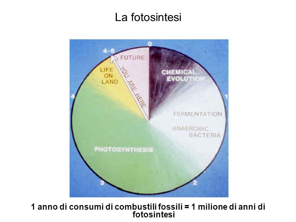 La fotosintesi 1 anno di consumi di combustili fossili = 1 milione di anni di fotosintesi
