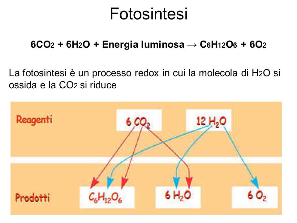 6CO2 + 6H2O + Energia luminosa → C6H12O6 + 6O2