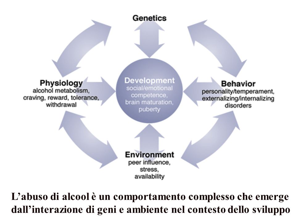 L'abuso di alcool è un comportamento complesso che emerge dall'interazione di geni e ambiente nel contesto dello sviluppo