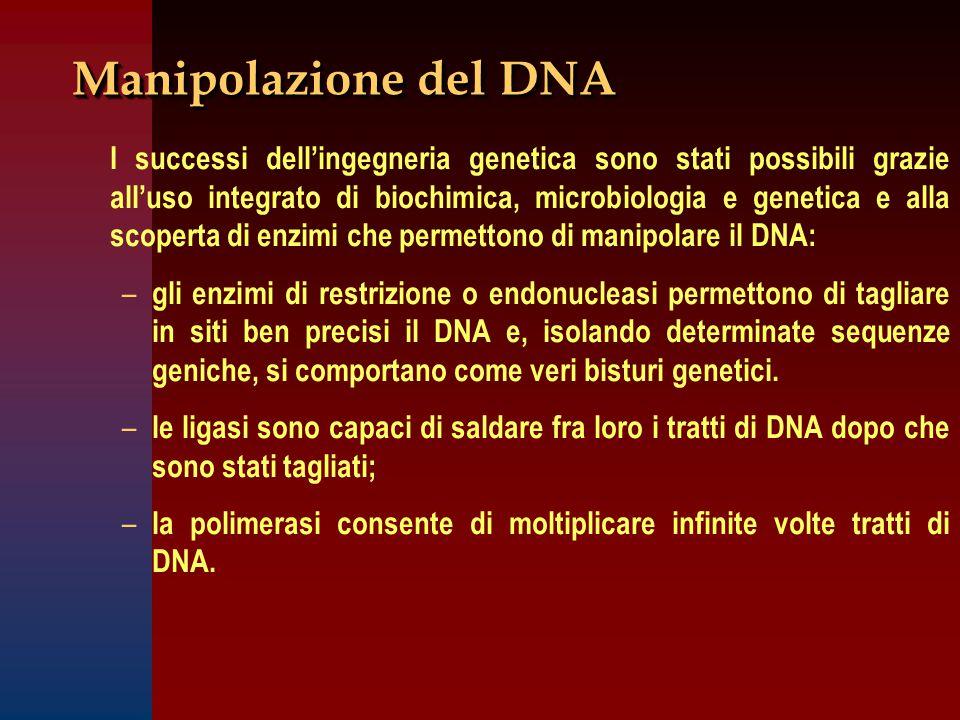 Manipolazione del DNA