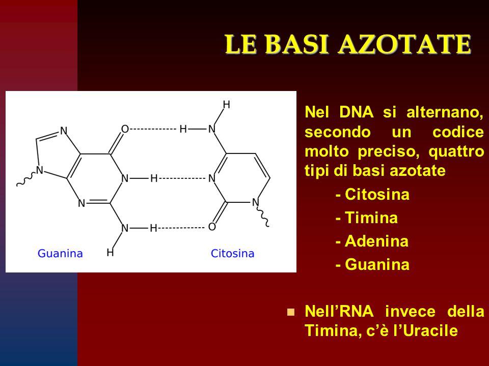 LE BASI AZOTATE Nel DNA si alternano, secondo un codice molto preciso, quattro tipi di basi azotate.