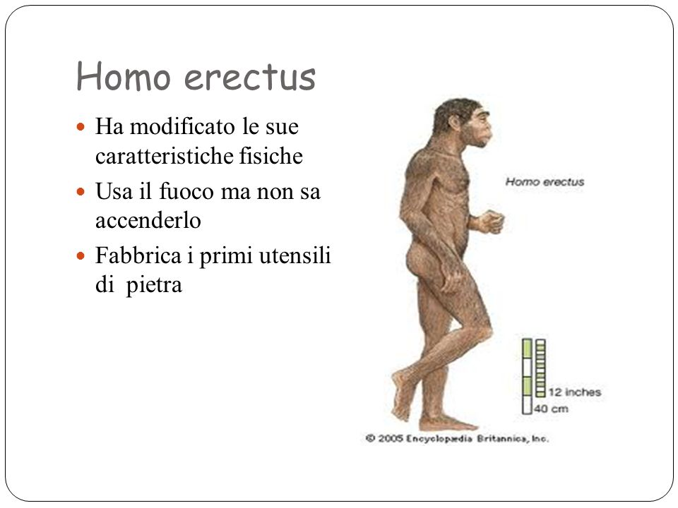 Homo erectus Ha modificato le sue caratteristiche fisiche