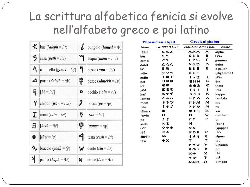 La scrittura alfabetica fenicia si evolve nell'alfabeto greco e poi latino