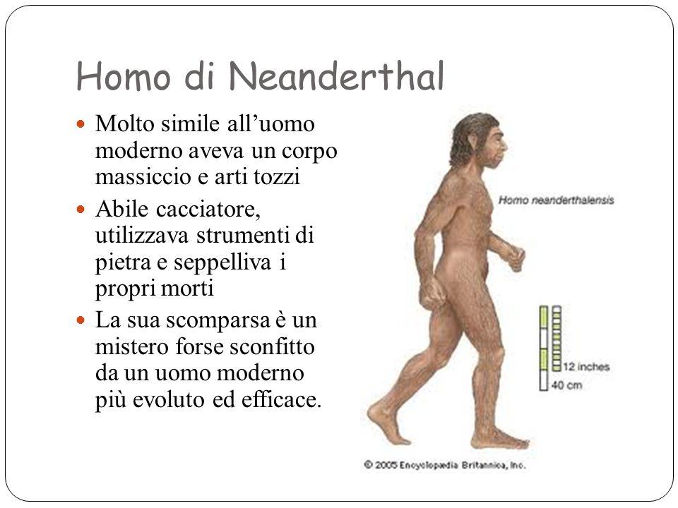 Homo di Neanderthal Molto simile all'uomo moderno aveva un corpo massiccio e arti tozzi.