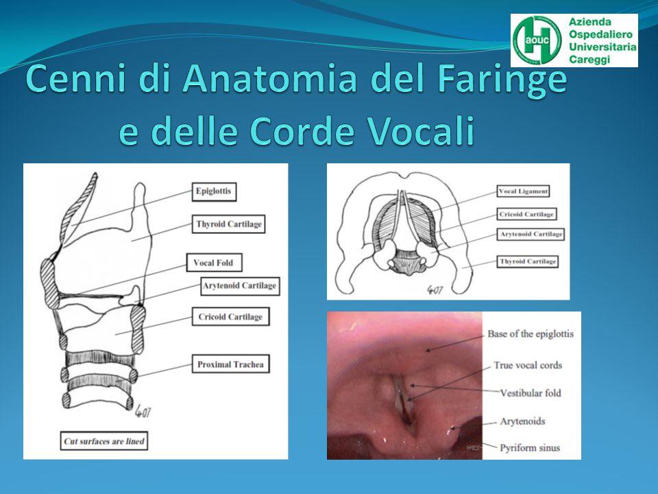 Cenni di Anatomia del Faringe e delle Corde Vocali
