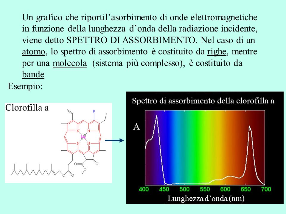 Spettro di assorbimento della clorofilla a