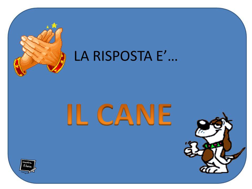 LA RISPOSTA E'… IL CANE