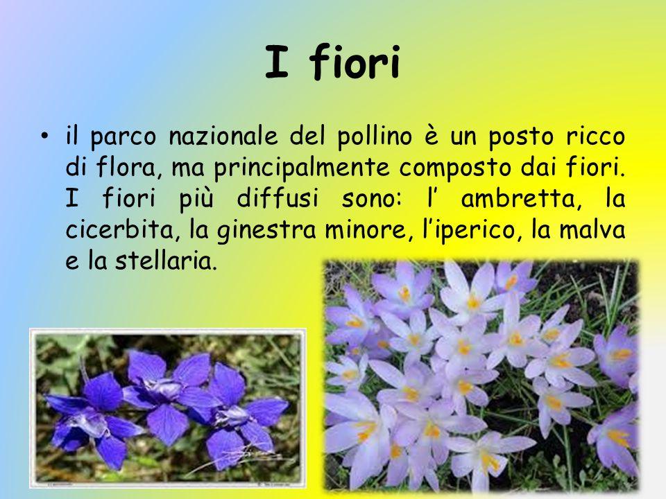 I fiori
