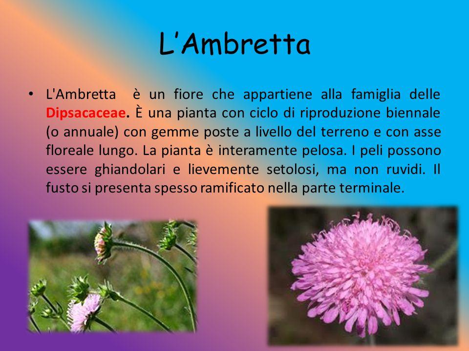 L'Ambretta