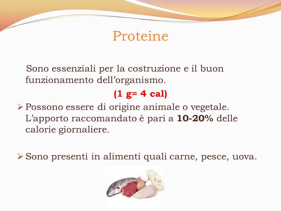 Proteine Sono essenziali per la costruzione e il buon funzionamento dell'organismo. (1 g= 4 cal)