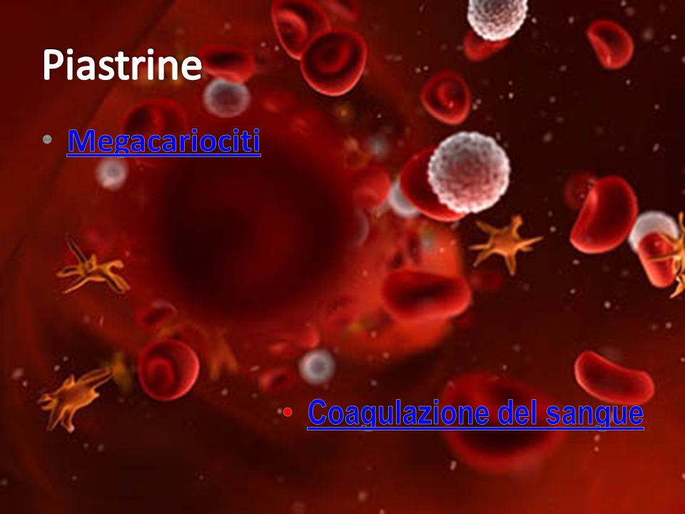 Piastrine Megacariociti Coagulazione del sangue