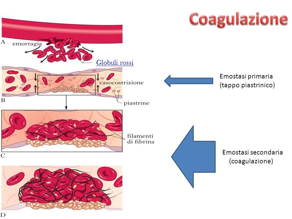 Emostasi secondaria (coagulazione)