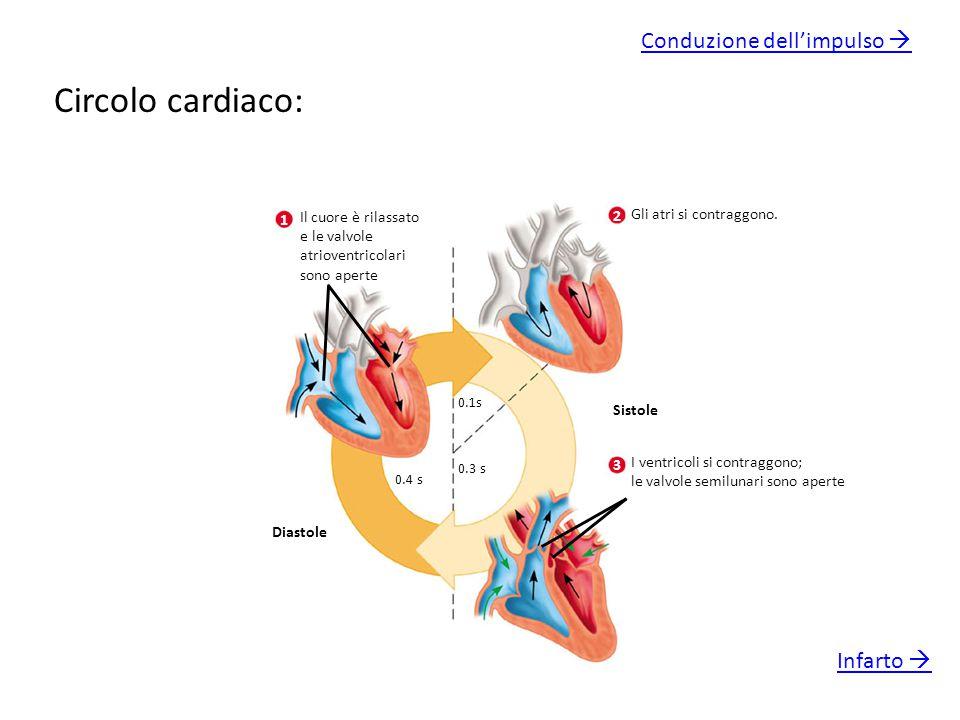 Circolo cardiaco: Conduzione dell'impulso  Infarto 