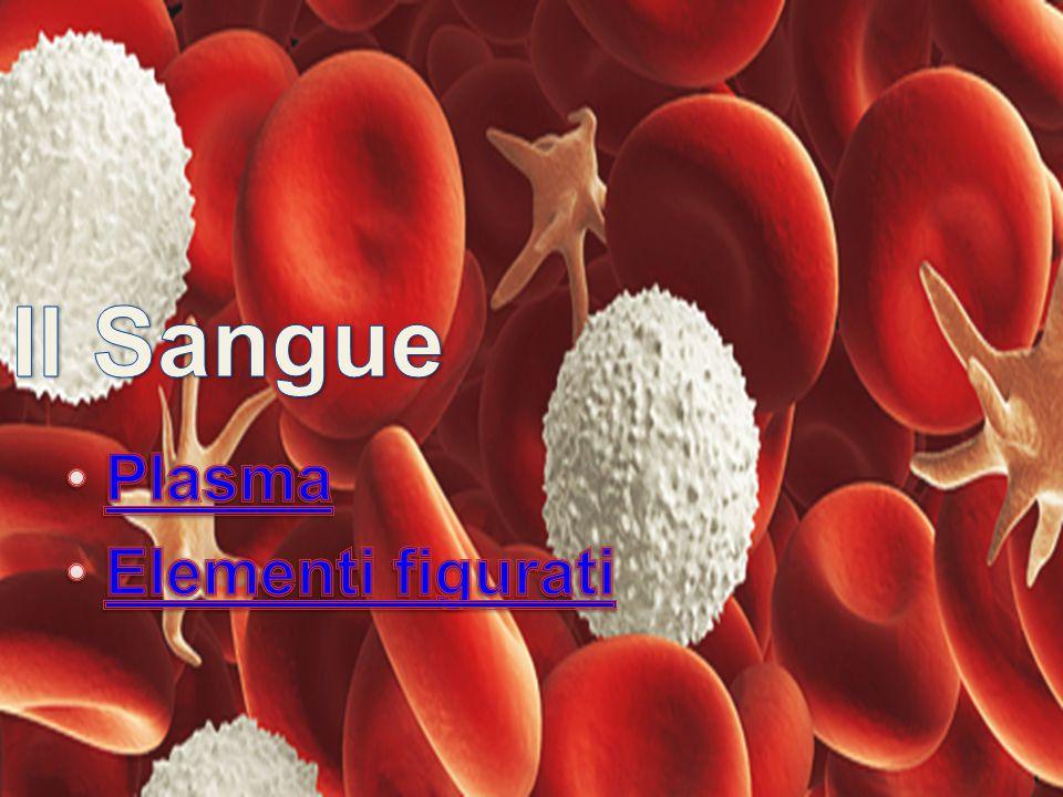 Il Sangue Plasma Elementi figurati