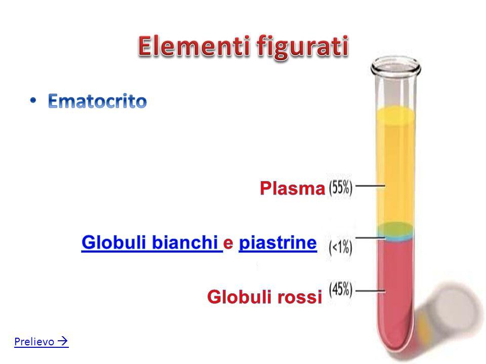 Elementi figurati Ematocrito Plasma Globuli bianchi e piastrine