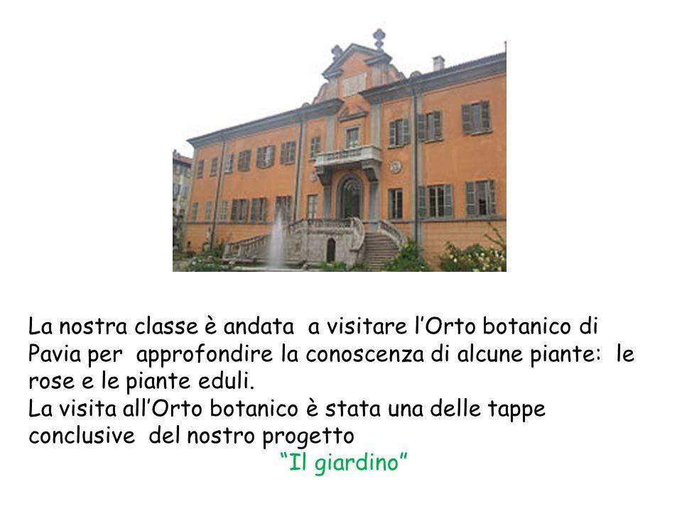La nostra classe è andata a visitare l'Orto botanico di Pavia per approfondire la conoscenza di alcune piante: le rose e le piante eduli.