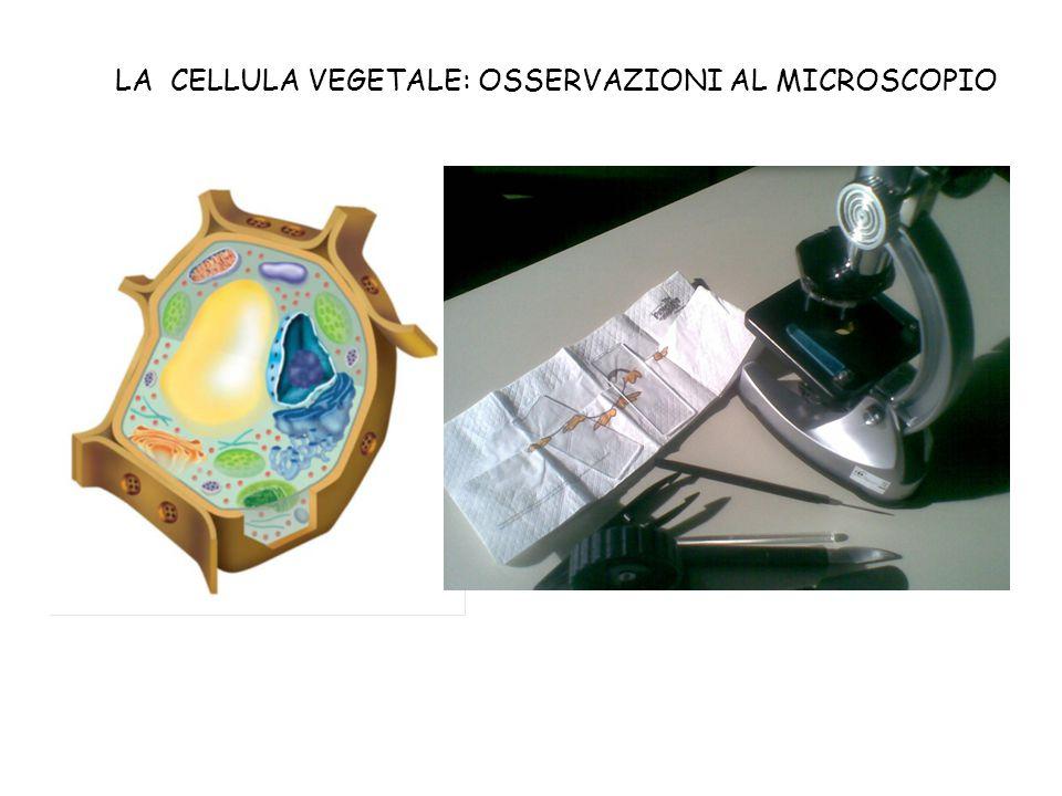 LA CELLULA VEGETALE: OSSERVAZIONI AL MICROSCOPIO