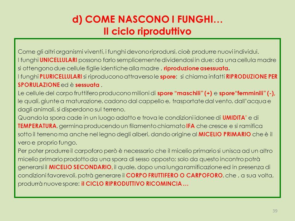 d) COME NASCONO I FUNGHI… Il ciclo riproduttivo