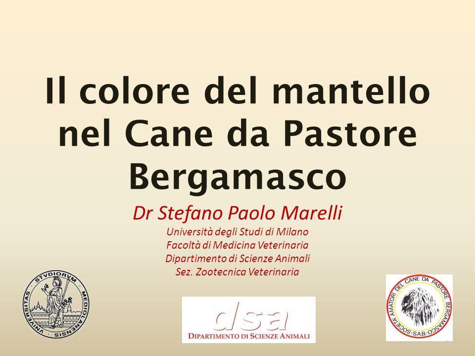 Il colore del mantello nel Cane da Pastore Bergamasco