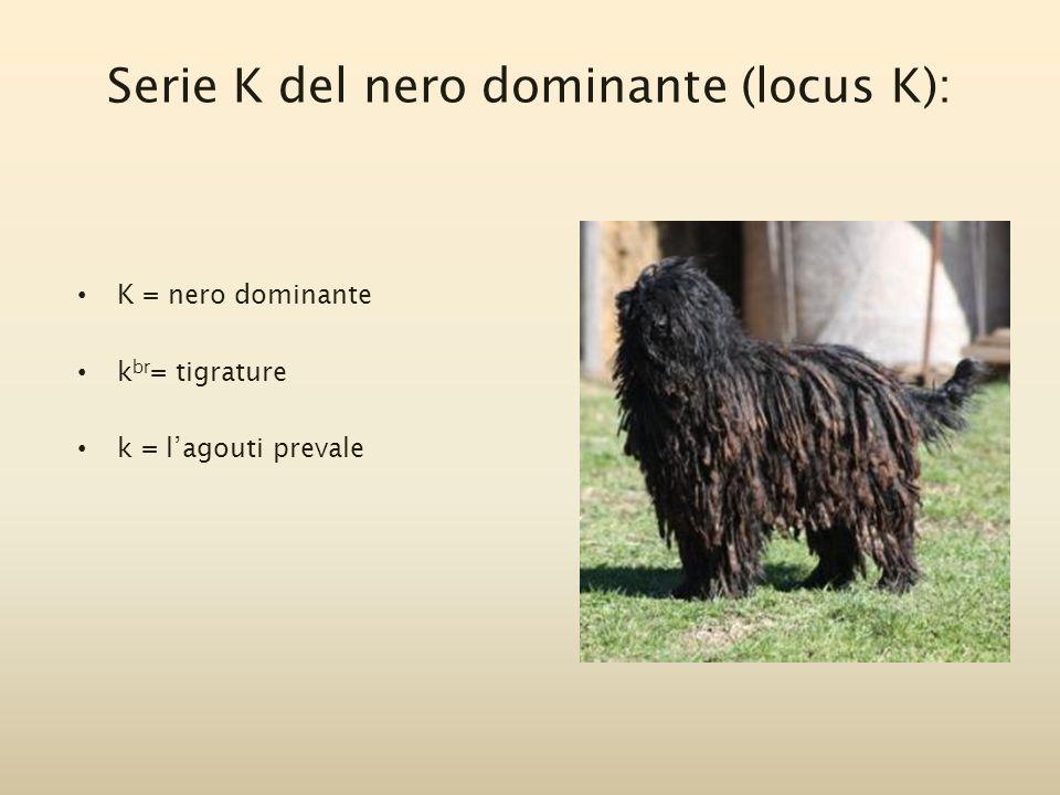 Serie K del nero dominante (locus K):