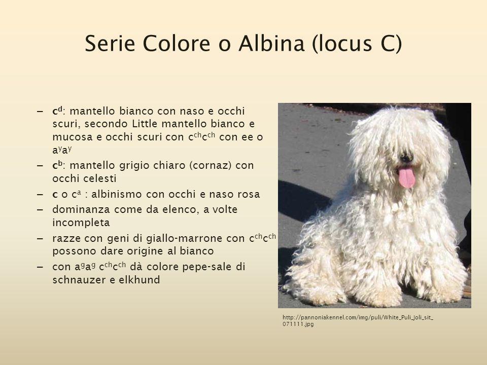 Serie Colore o Albina (locus C)