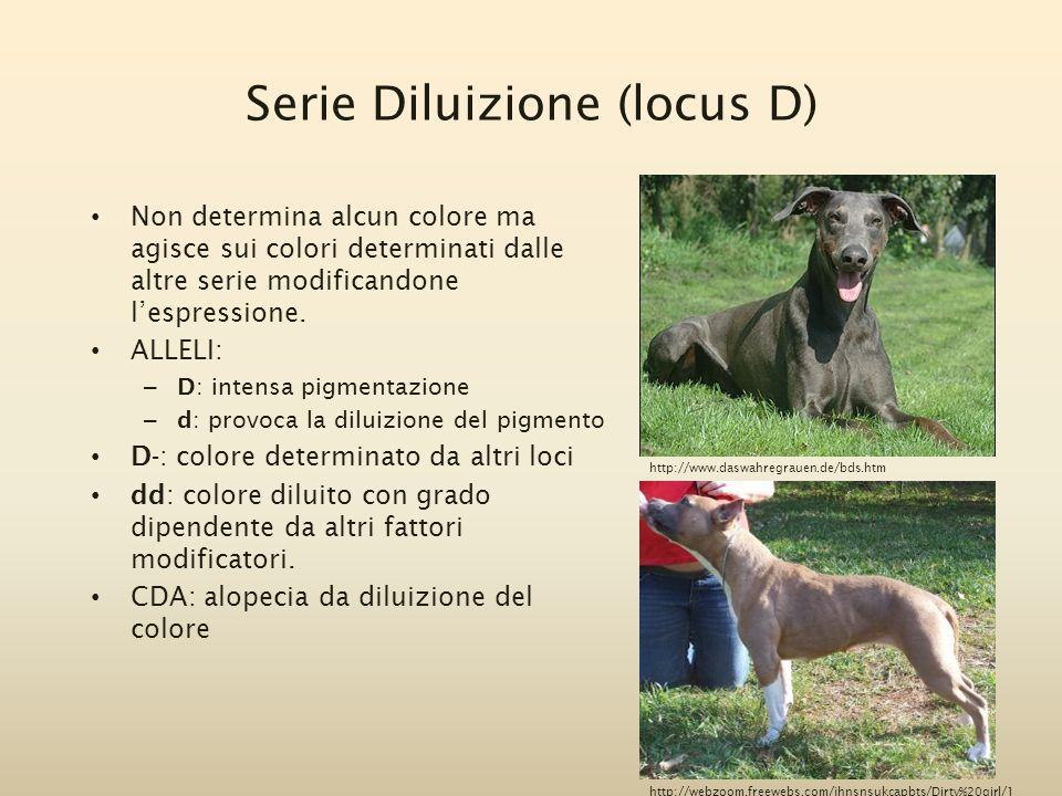 Serie Diluizione (locus D)