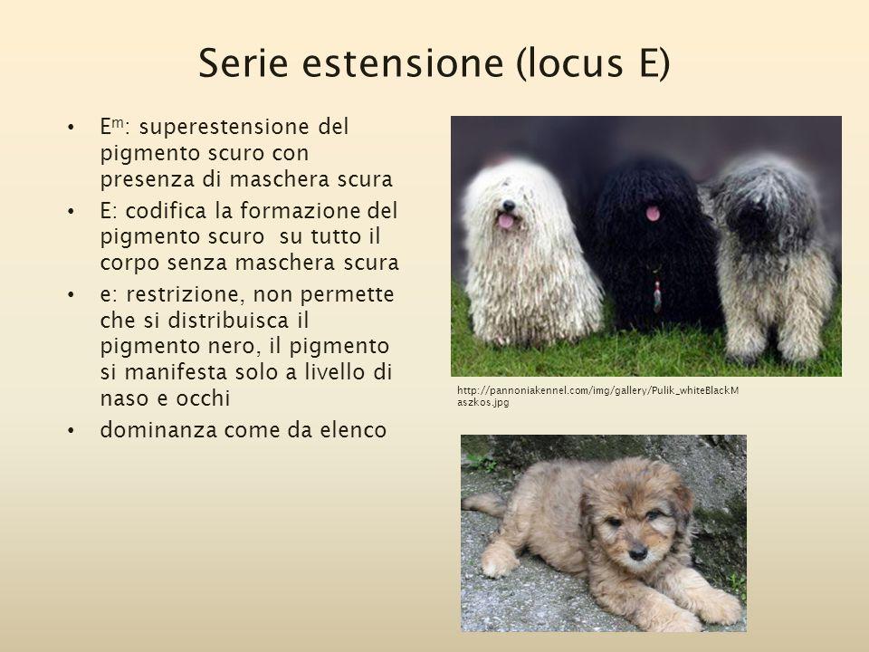 Serie estensione (locus E)