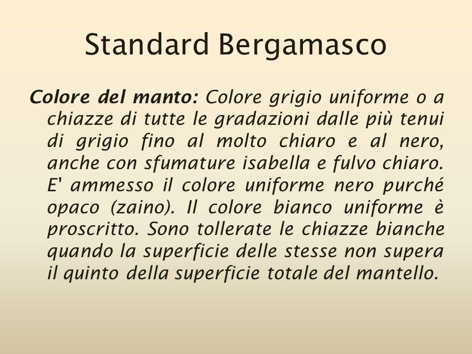 Standard Bergamasco