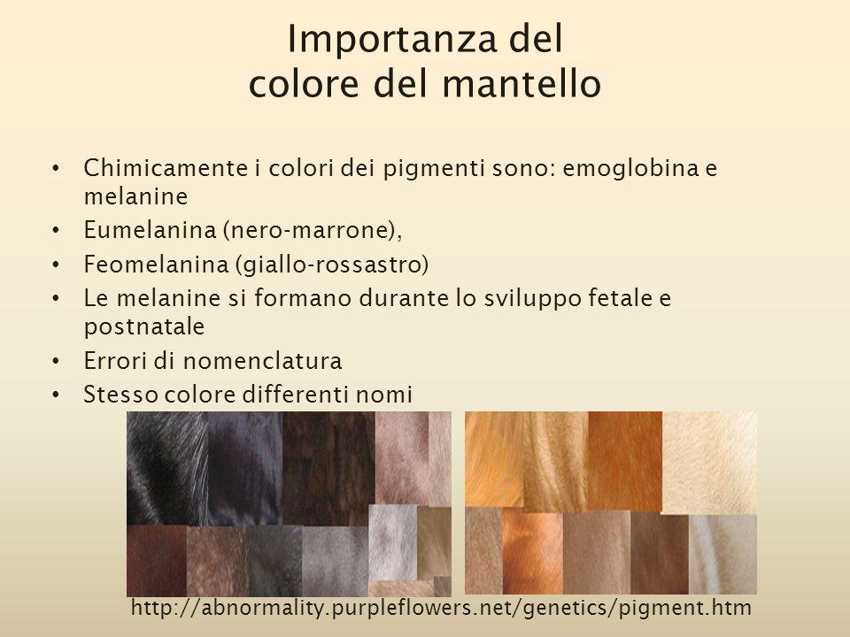 Importanza del colore del mantello