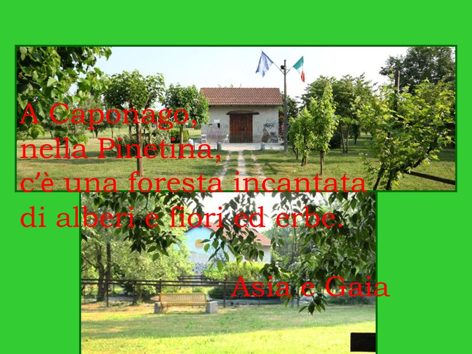A Caponago, nella Pinetina, c'è una foresta incantata di alberi e fiori ed erbe. Asia e Gaia