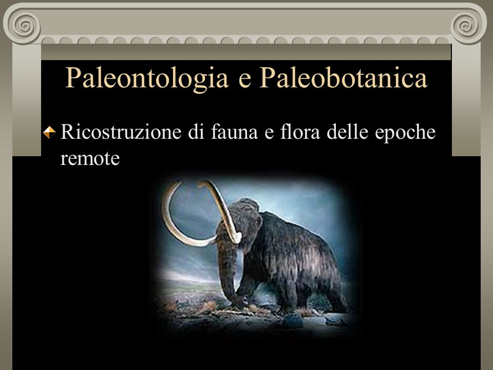 Paleontologia e Paleobotanica
