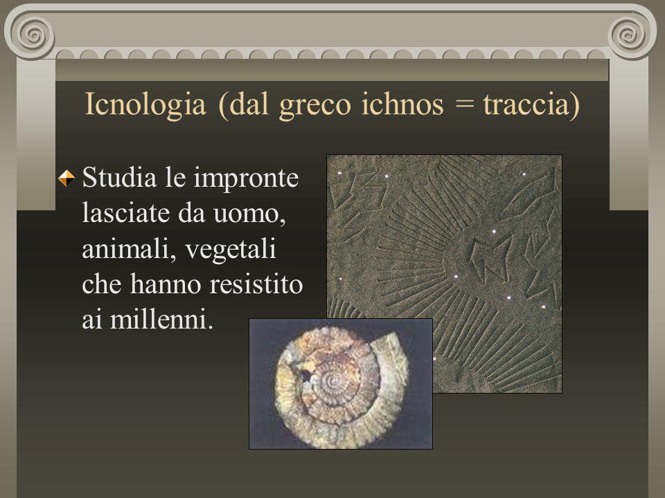 Icnologia (dal greco ichnos = traccia)