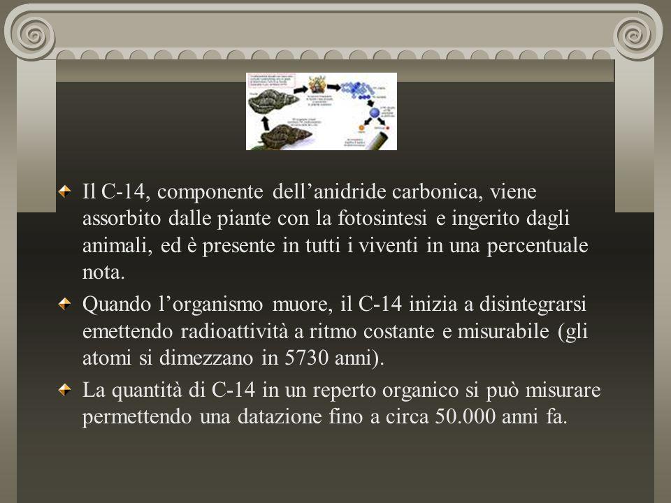 Il C-14, componente dell'anidride carbonica, viene assorbito dalle piante con la fotosintesi e ingerito dagli animali, ed è presente in tutti i viventi in una percentuale nota.