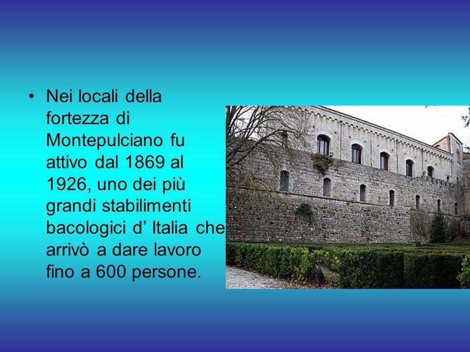 Nei locali della fortezza di Montepulciano fu attivo dal 1869 al 1926, uno dei più grandi stabilimenti bacologici d' Italia che arrivò a dare lavoro fino a 600 persone.