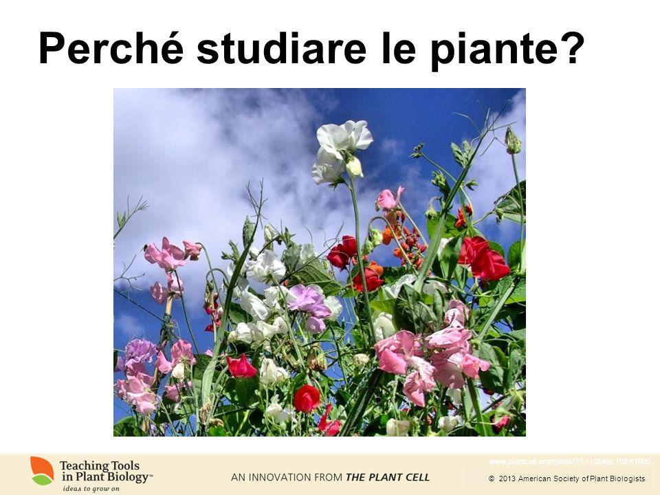Perché studiare le piante