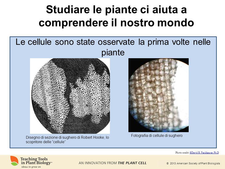 Studiare le piante ci aiuta a comprendere il nostro mondo