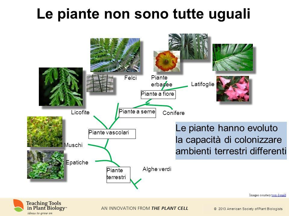 Le piante non sono tutte uguali