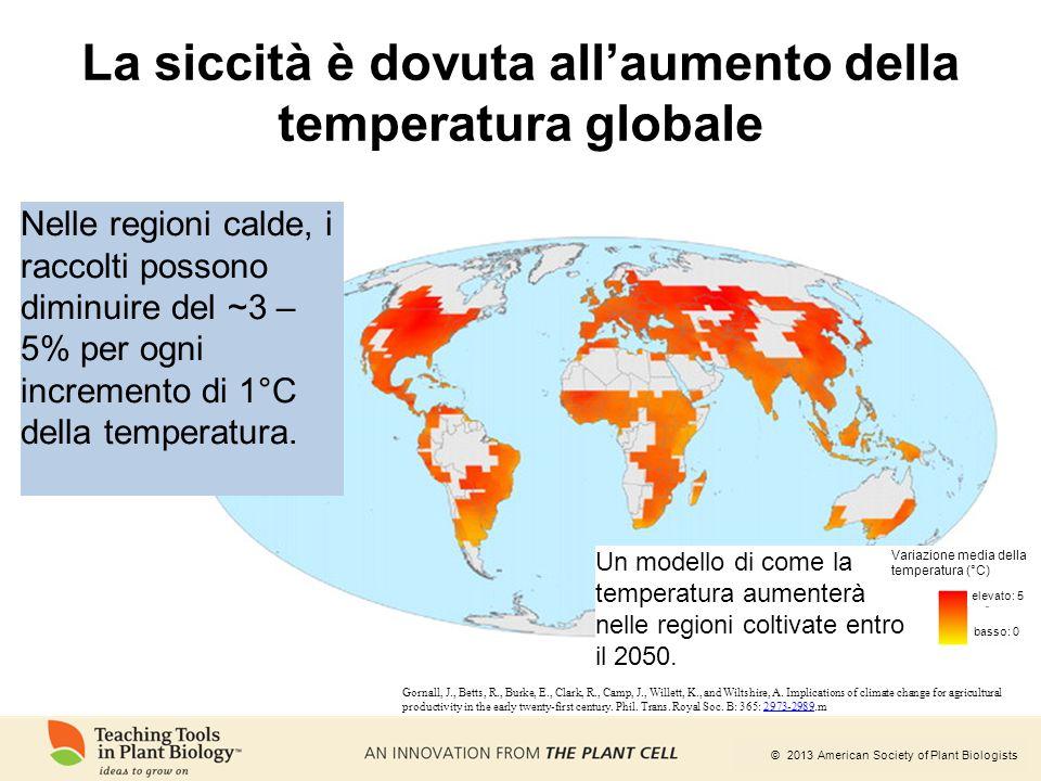 La siccità è dovuta all'aumento della temperatura globale