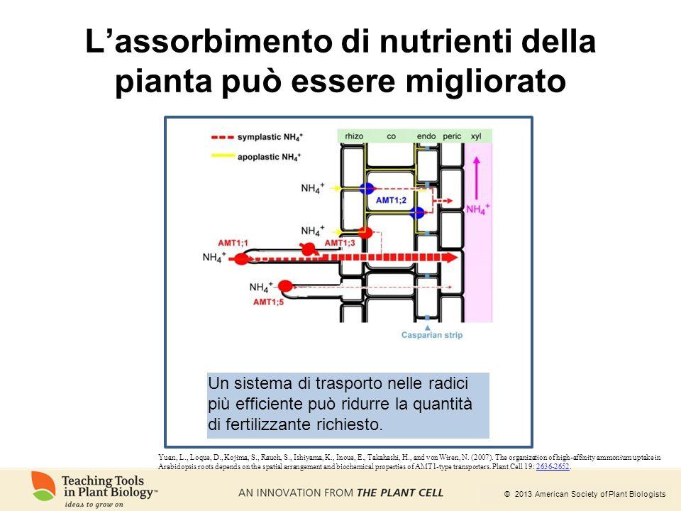L'assorbimento di nutrienti della pianta può essere migliorato