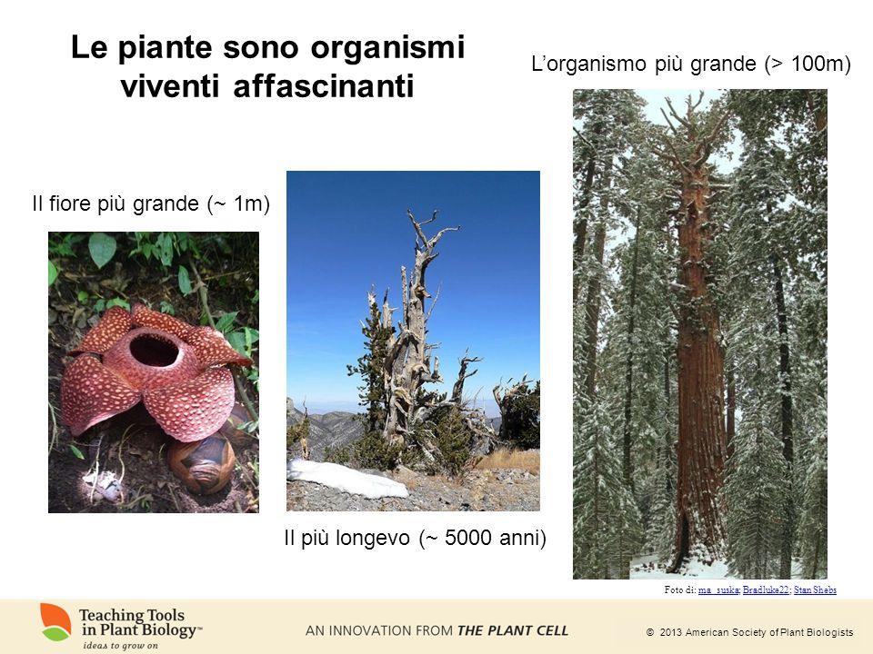 Le piante sono organismi viventi affascinanti