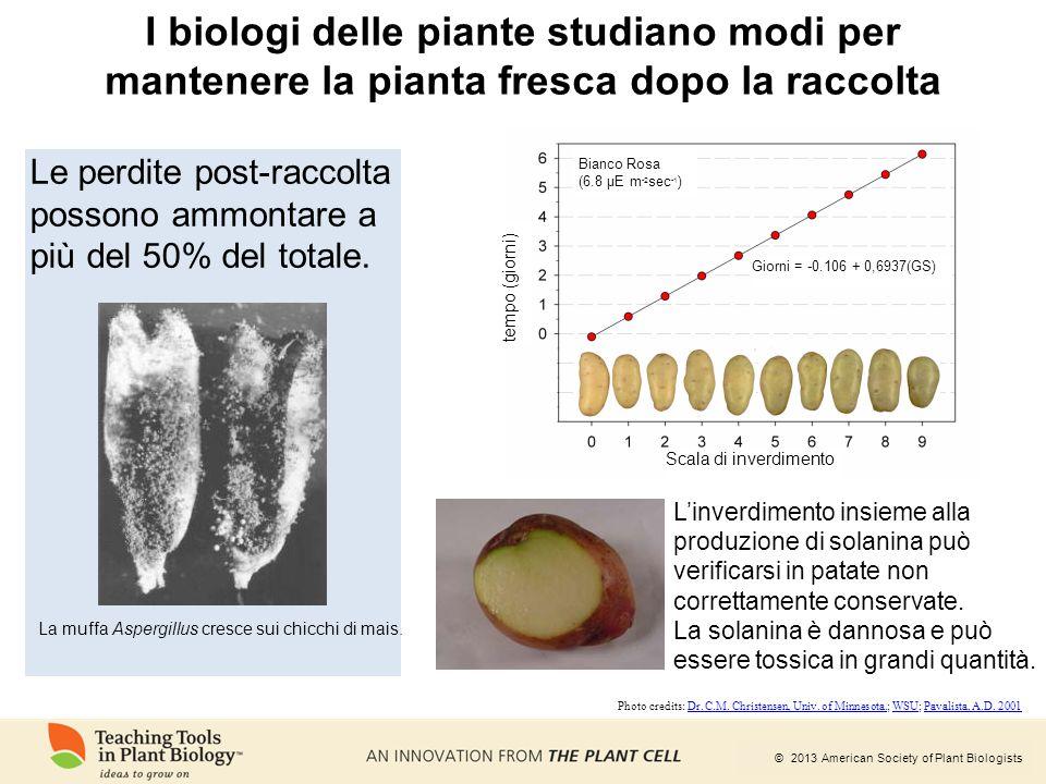 I biologi delle piante studiano modi per mantenere la pianta fresca dopo la raccolta